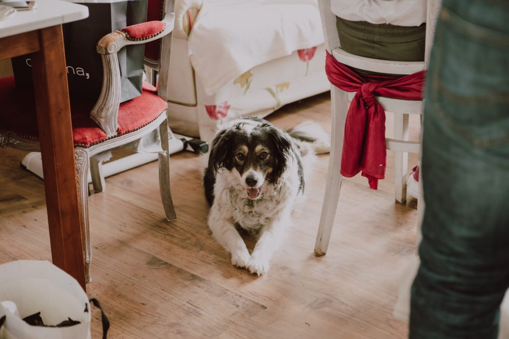 and the newlywed dog is excited about the wedding